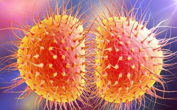 Song cầu khuẩn gây bệnh lậu
